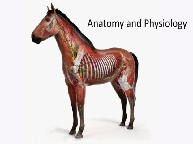 Veterinary Nurse Training Academy: Anatomy and Physiology course image