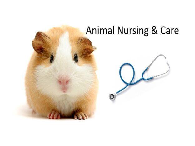 Veterinary Nurse Training Academy: Animal Nursing and Care course image