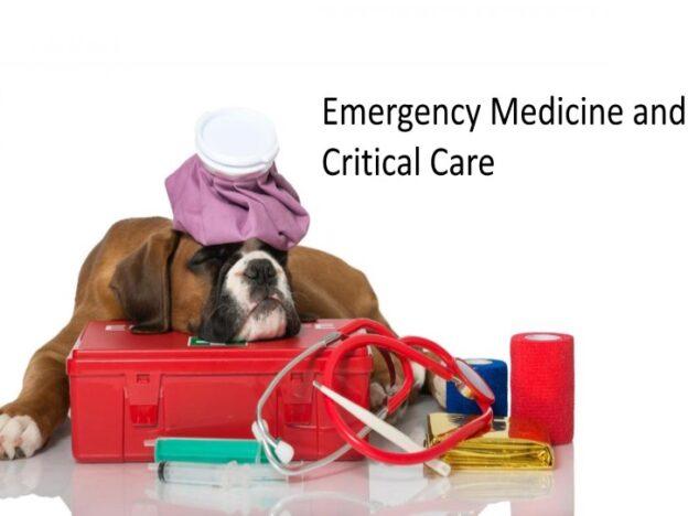 Veterinary Nurse Training Academy: Emergency Medicine and Critical Care course image