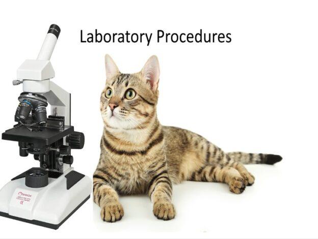 Veterinary Nurse Training Academy: Laboratory Procedures course image