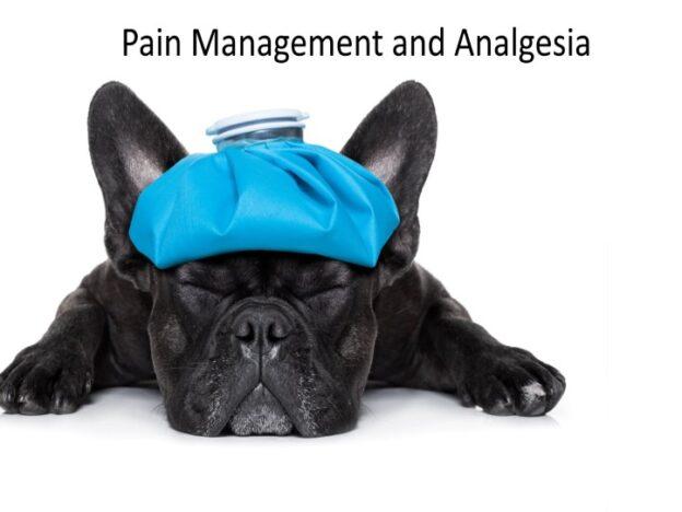 Veterinary Nurse Training Academy: Pain Management course image