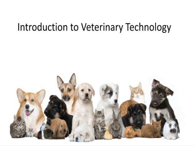 Veterinary Nurse Training Academy: Introduction to Veterinary Technology/Nursing course image
